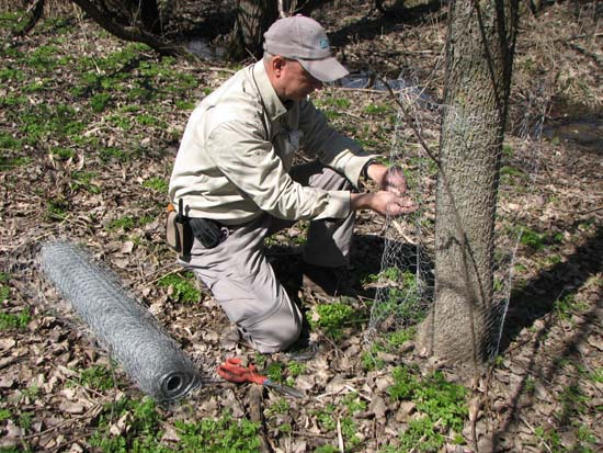 Le castor des les sous surveillance blogue de - Jeux de tronconneuse qui coupe les arbres ...