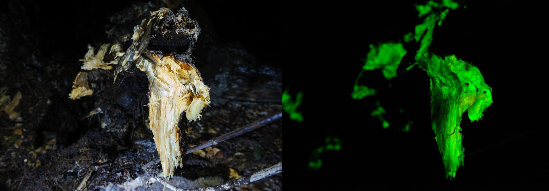 la bioluminescence quand la vie a besoin de la nuit