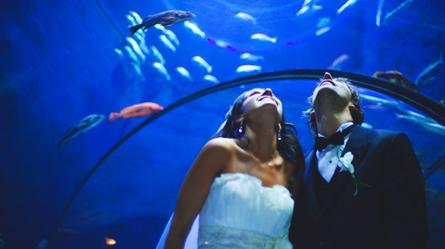 Aquarium du Québec  Établissements touristiques  Sépaq