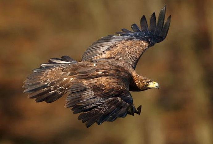 au l'aigle national Suivi d'Anticosti royal parc Blogue de kiOuTXZP
