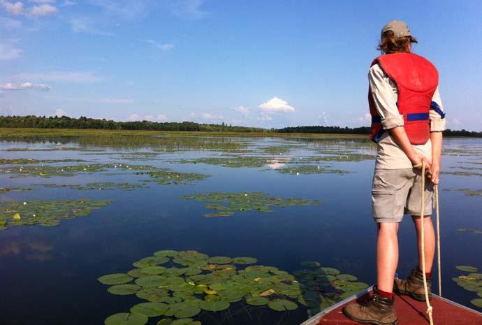 Alerte la ch taigne d eau l 39 ouest du qu bec est touch blogue de conservation parcs - Chataigne a l eau ...